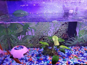 Продаём аквариум 7 рыбок фильтр, компрессор,лампа,градусник,камушки,ж