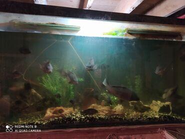 Salam akvarium satılır hamısı bir yerdə 1 bio filteri bütün