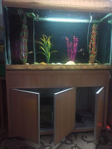 стиральная машина малютка с отжимом цена in Кыргызстан | СТИРАЛЬНЫЕ МАШИНЫ: Продаю аквариум с системой очистки и фильтрации. Объем 450-500 л. Цена