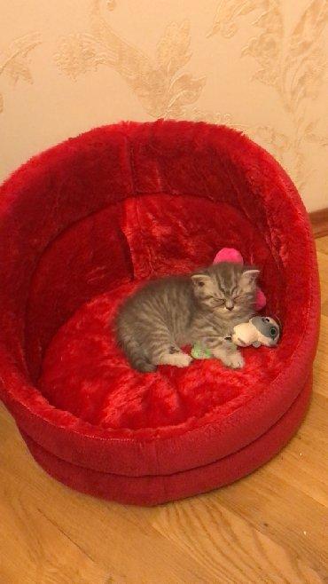 домашние котята в Азербайджан: Кроватка для котят Pisikler ucun yataq  Yenidir
