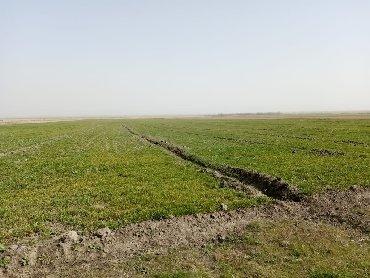 hektar - Azərbaycan: Satış 5000 sot Kənd təsərrüfatı mülkiyyətçidən