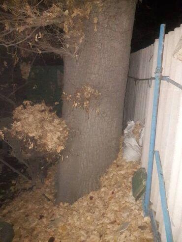 Продам дерево дуб с 64 года растёт.очень большой. под самораспил.цена