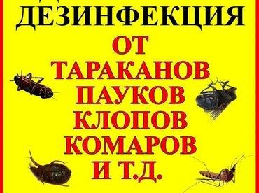 Уничтожение всех видов насекомых: в Бишкек