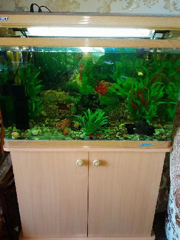 shvejnuju mashinku podolsk 142 s tumboj в Кыргызстан: Срочно продам аквариум. 142 литра