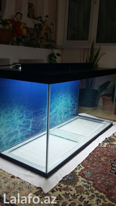 Bakı şəhərində Teze hazirlanip 325 litrelik akvarium 10mll wuwenin qalinliqi qapaqi- şəkil 4