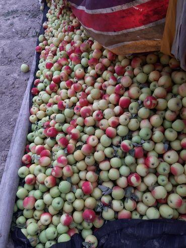 Овощи, фрукты - Кыргызстан: Бойка алма сатылат