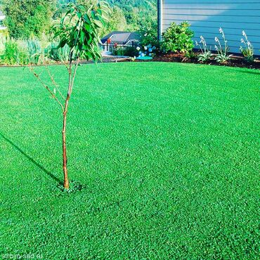 Микроклевер - это экологически чистый, зеленый и густой газон. Его