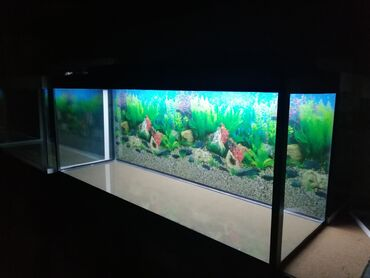 Təzə 120 litrelik akvariumBaşqalarıda var seçim coxduBalıqlar var