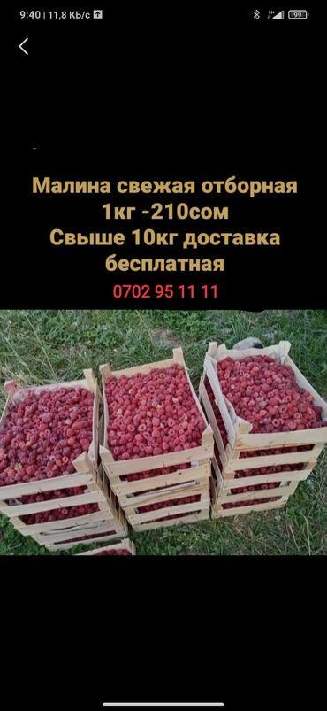 huawei p40 бишкек в Кыргызстан: Малина свой огород доставка Бишкек