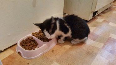 Нашёлся котик возраст пару месяцев. в Бишкек