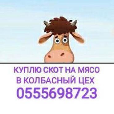 Животные - Мыкан: В колбасный цех принимаем скот и вынужденый забой в любое время