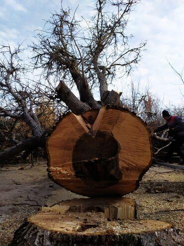 ствол грецкого ореха в Кыргызстан: | Листовые деревья