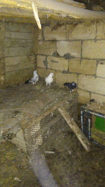 Животные - Ахсу: Птицы