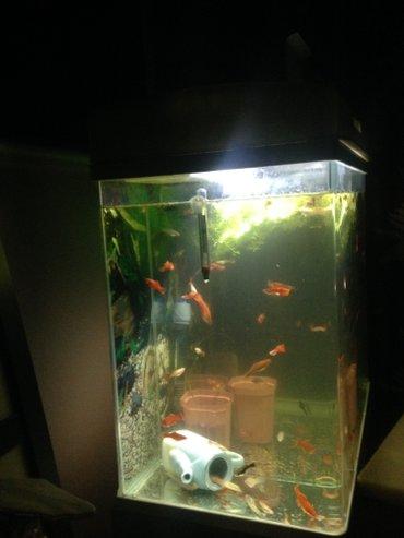со всеми комплектующими в Кыргызстан: Продаю аквариум  обьем 70л полный комплект  с рыбками около 10-15 шт