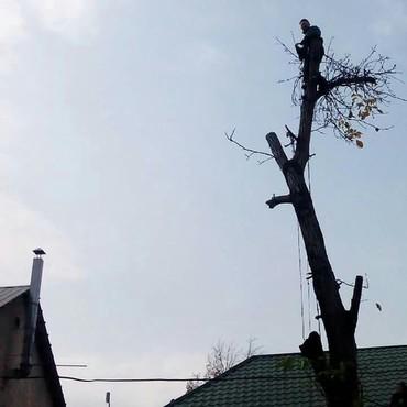 Бытовые услуги - Кыргызстан: Пилю дрова, деревья. заточка цепей. информация в теме +фото. Пилим