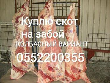 aveo t в Кыргызстан: Куплю коров телок лошадей в любом виде в колбасный цех