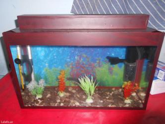 Bakı şəhərində Akvarium ici dolu herbir avadanliqlariyla biryerde hamisi tezedi
