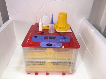 Bakı şəhərində En muasir mini inkubator,36 ve 56 toyuq yumurtasi tutur, 6 ekrani var,