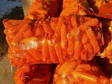 Продаю 400 тон кукурузу в мешках сухая в Шопоков