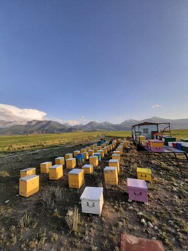 21 объявлений: Мёд Исик Кульский майский и горный мед
