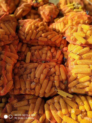 63 объявлений: Кукуруза