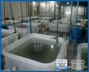 Рыбные хозяйства и сопутствующее в Бишкек