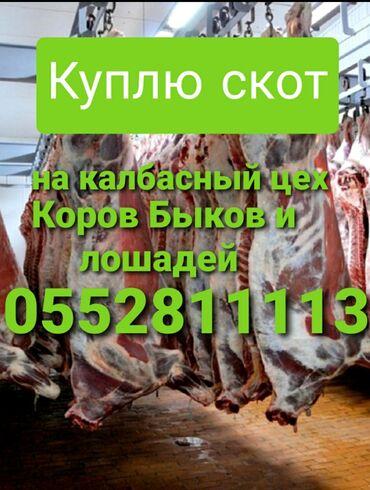 животн в Кыргызстан: Принимаем скот в любом виде в любое время суток колбасный цех