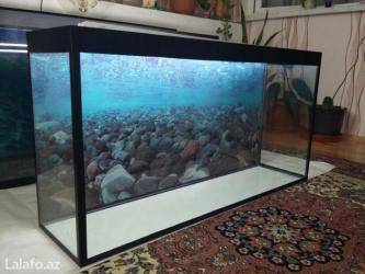 Bakı şəhərində 1metrelik akvarium teze