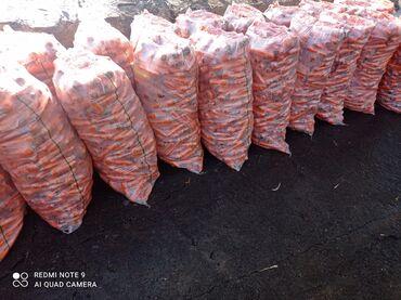 наушники panasonic белые в Кыргызстан: Морковка оптом и в розницу
