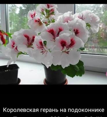 Репетитор (учитель начальных классов) в Бишкек