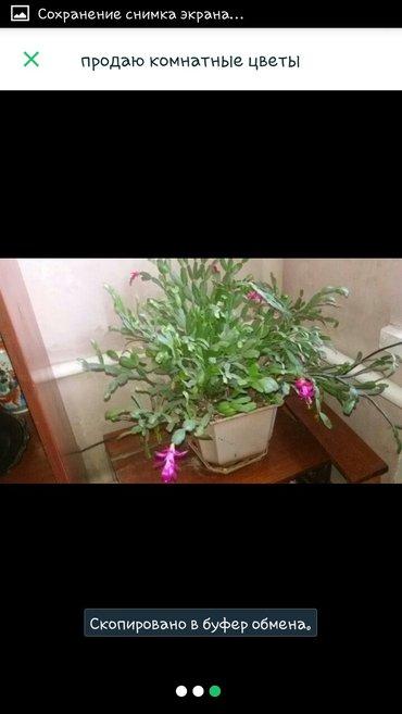 Шикарные цветы недорого в Бишкек