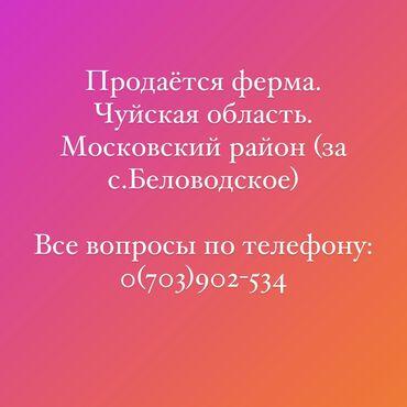 Недвижимость - Беловодское: 100 кв. м 3 комнаты, Сарай
