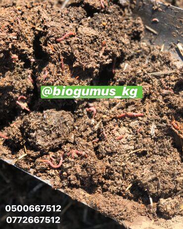 Биогумус калифорнийские черви продажа
