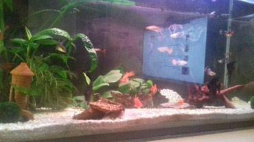 Paul shark - Srbija: Opremljen akvarijum sa spoljnim filterom i ribicama. ( oko 45) Ksifo