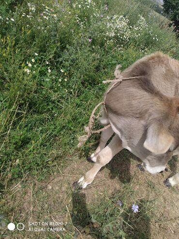 Животные - Таш-Мойнок: Төрт айлык торпок