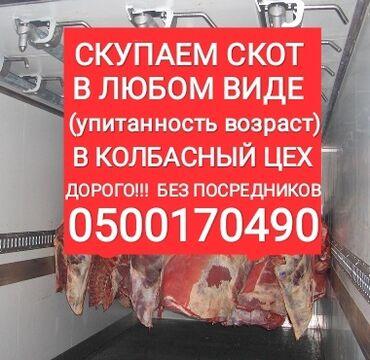 Скупаем в колбасный цех коров лошадей быков и тёлок а также вынужденый