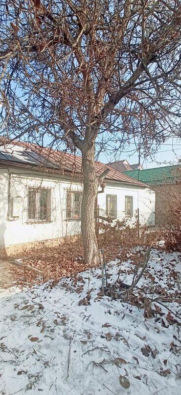 аренда квартир в бишкеке район восток 5 в Кыргызстан: Продаю орех. Район Восток 5. Самовывоз