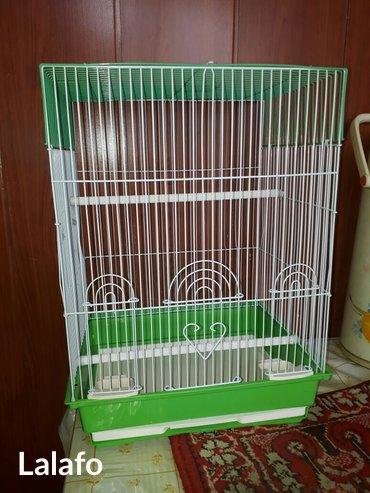 Новые клетки для птиц и грызунов в Кок-Ой