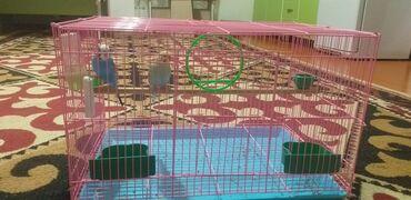 Животные - Жаркынбаев: Птицы