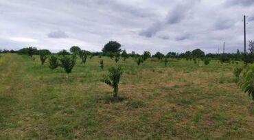 Недвижимость - Губа: Продам 100 соток Для сельского хозяйства от собственника