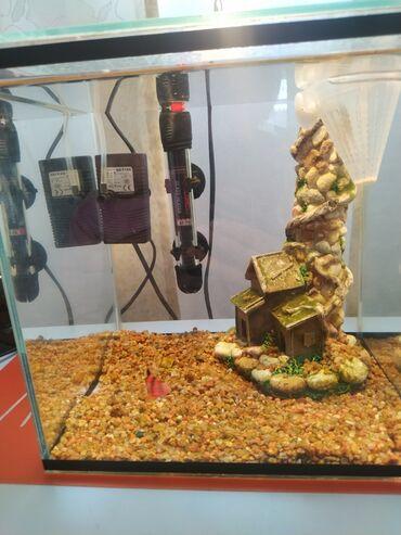 Продаем аквариум. В идеальном состоянии. Все входит в комплект