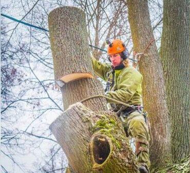 Спилить ветки.Спилить дерево.Пилить дерево.Срубить дерево.Бак