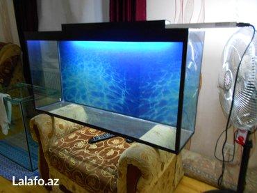 Bakı şəhərində teze akvarium uzunu 1 metir hundurluyu 50 sm eni 25 sm qapaqi var