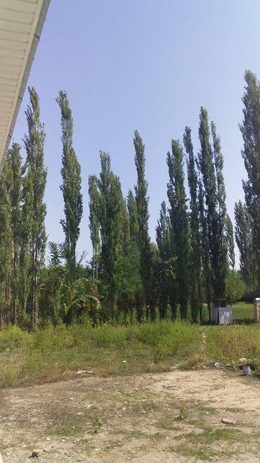 Недвижимость - Базар-Коргон: Продам Дом 160 кв. м, 4 комнаты