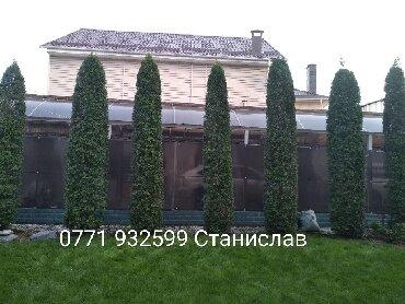 протеин для роста в Кыргызстан: Обрезка хвойных плодовых деревьев также обрабатываем их при посадке