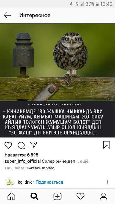 Садовая одежда - Кыргызстан: Тез аранын ичинде алма бак караганы үйбүлөлү адам керек көл тарапка а