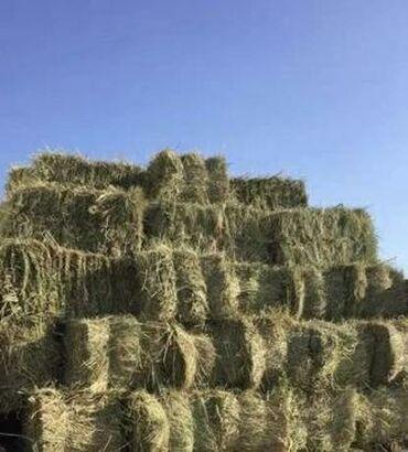 Toxumlar və çöl bitkiləri - Azərbaycan: Yonca presi satılır qiyməti 3.30 AZN