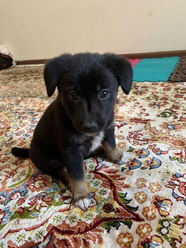 Ищем дом для щенка, примерно 1,5-2 месяца, девочка . От клещей и глист