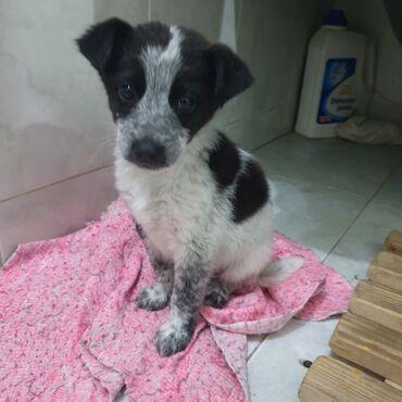 Отдаём щенка (мальчик, 2 месяца) в добрые руки