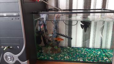 Срочно продаю аквариум, в связи с переездом. Что входит: аквариум